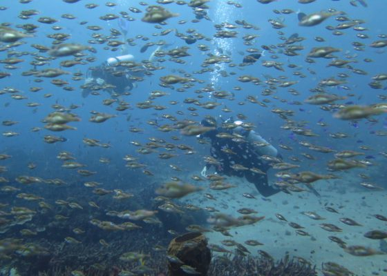 diving-in-nusa-penida