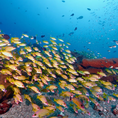 Diving-Nusa-Penida