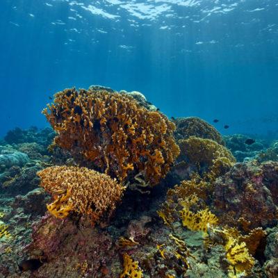 togean-islands-diving