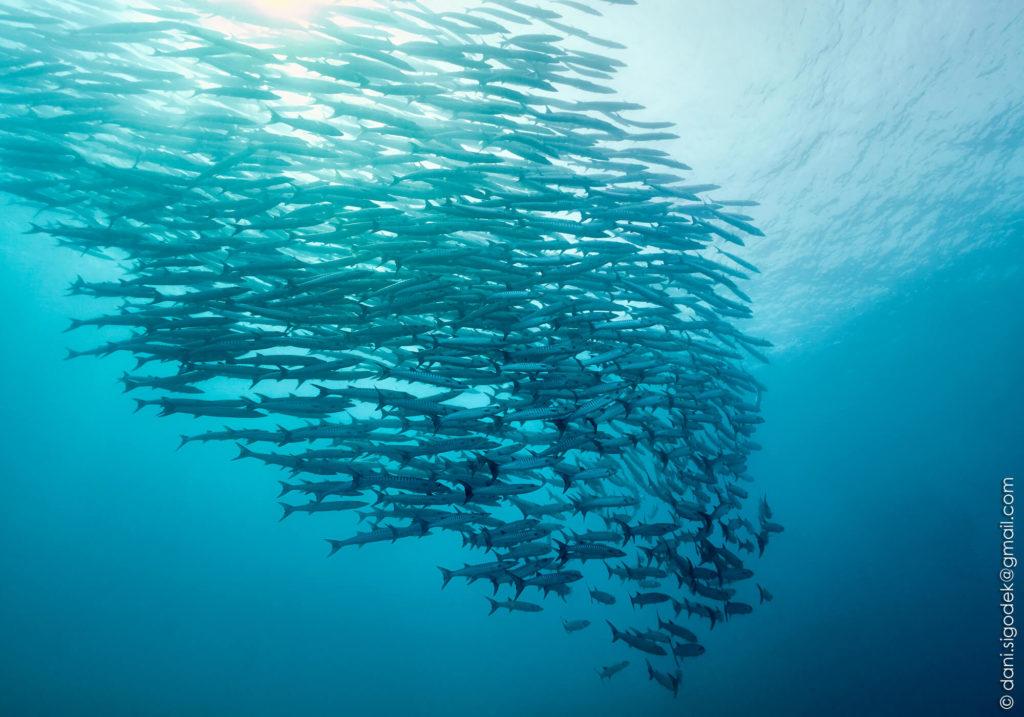 Dive-indonesia
