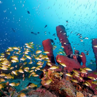 Togian-diving