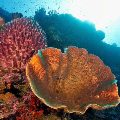 divemaster-indonesia