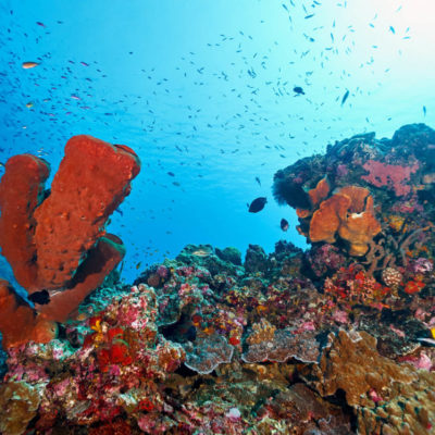togean-islands-diving