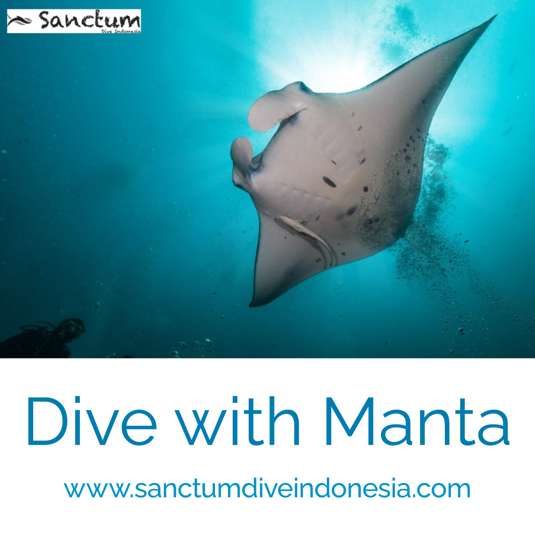 dive-with-manta
